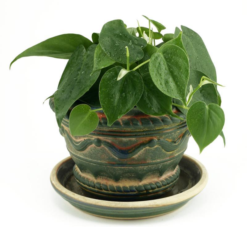 image4-1 | Комнатные растения, которым не требуется много света!