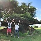 オアフ島から元気をもらおう♪ ハワイ・パワースポット&ヒーリングツアーのイメージ