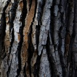 Tree Bark Texture Free Stock Photo Iso Republic