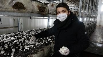 Şehir Plancısı genç girişimci mantar üretimine başladı, devlet desteği ile bölgenin en büyük tesisini kurdu