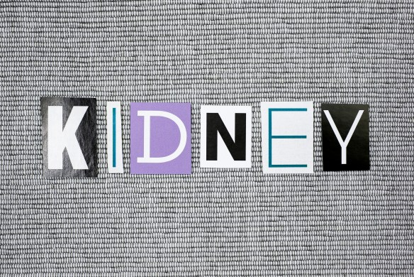 kidney concept