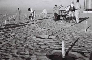 Kibbutzniks planting trees at Kibbutz Beeri in the Negev Desert, 1947