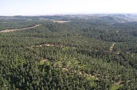 One of Israel's many forests today