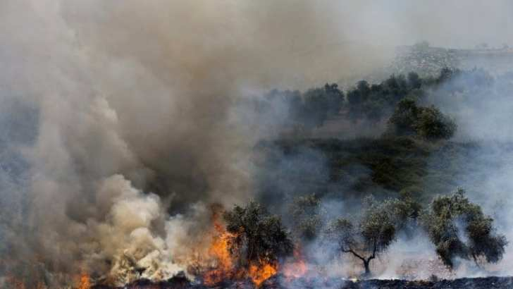 Palestine: Jewish Settlers Torch 100 of World's Oldest Olive Trees