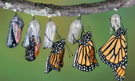 Leadership-and-personal-transformation