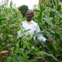 A green revolution using frugal innovation: crop insurance for Tanzanian farmers by Meine Pieter van Dijk