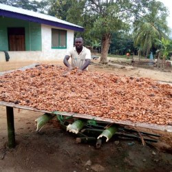 The bitter aftertaste of chocolate: why Ghana's cocoa farmers are struggling to adhere to sustainable cocoa production standards by Adjoa Annan