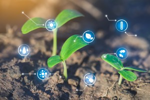 Seedlings are growing, Modern agriculture with technology concept
