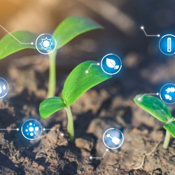EADI/ISS Series | Digitalizing agriculture in Africa: promises and risks of an emerging trend by Fabio Gatti and Oane Visser