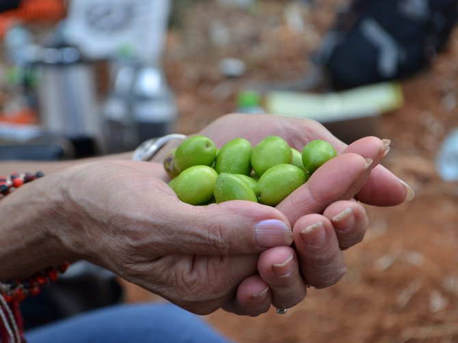 Olives in the hand of an old woman