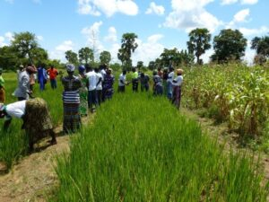 Collaborative advisory services help farmers to evolve in their practices – Agronomy for Sustainable Development blog
