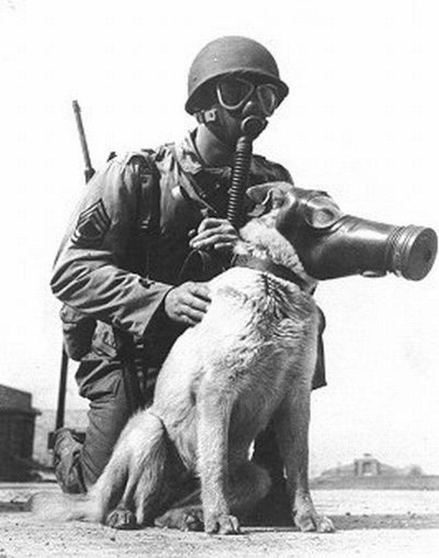 Perros de Guerra.