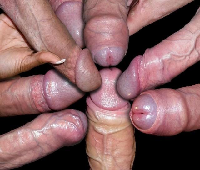 Eight Hard Cocks