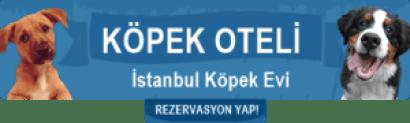 istanbul köpek oteli