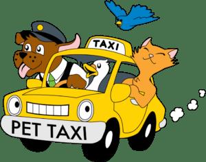 istanbul pet taksi hizmeti