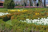 istanbul_tulip_festival_lale (1)