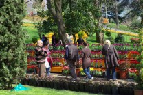 istanbul_tulip_festival_lale (18)