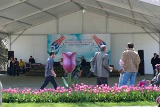 istanbul_tulip_festival_lale (27)