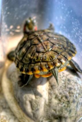 our turtles, by ozgur ozkok, pentax k10d + 100 mm/2.8