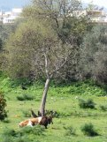 kos_island_eleka_rugam_rebane_kaire_raiend-5