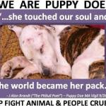 Puppy Doe's Legacy: Tougher Animal Cruelty Laws in Massachusetts