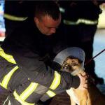More Than $1 Million Raised Day After Arson Fire Destroys Dog Shelter