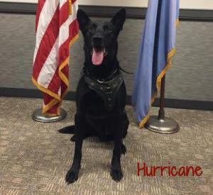 secret service dog Hurricane