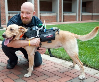 cyber dog harness for two-way communication