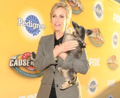 jane lynch fox's cause for paws