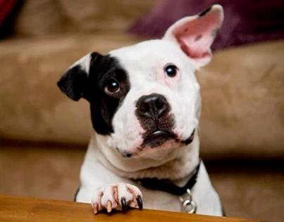 jonny justice aspca dog of the year