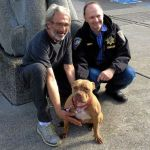 Pit Bull Swims Mile from Sinking Boat, Walks to Church and Is Reunited with Dog Dad