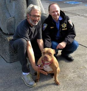 pit bull escapes sinking boat and swims mile to shore