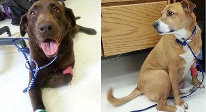 scorpion venom tumor paint saves dogs