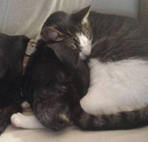 gracie michael vick dog with cat