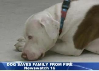 pit bull saves family from house fire