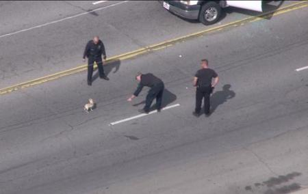 police officers try to catch dog in car chase