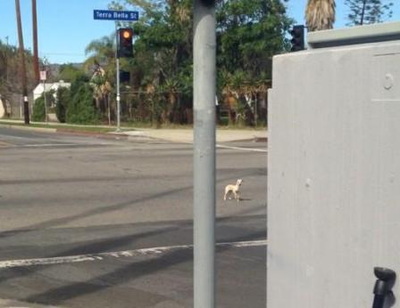 dog in car chase in street