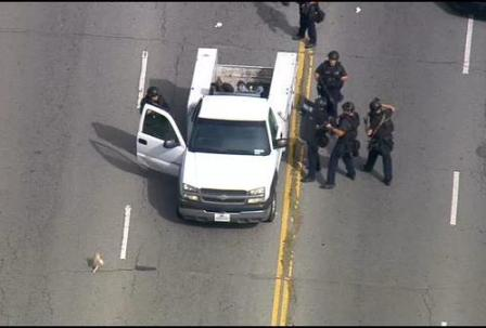 dog in car chase running from truck