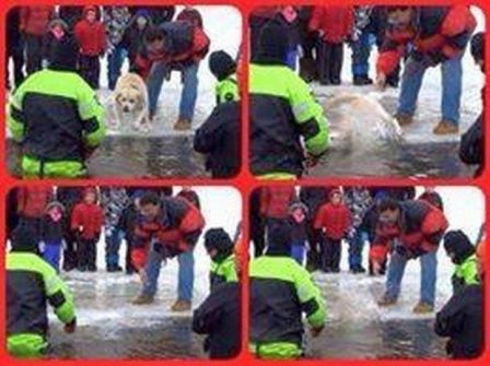 dog in massachusetts polar plunge