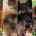 Dogs Found Safe after Carjacking of Doggie Day Care Minivan