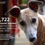 First-Ever Greyhound Racing Report Says Nearly 12,000 Dogs Injured