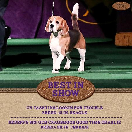 miss p westminster best in show