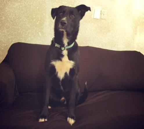 hero dallas dog lead rescuers to puppies