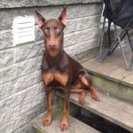 Rock Climber Rescues Doberman Trapped Deep in NY State Park Crevice