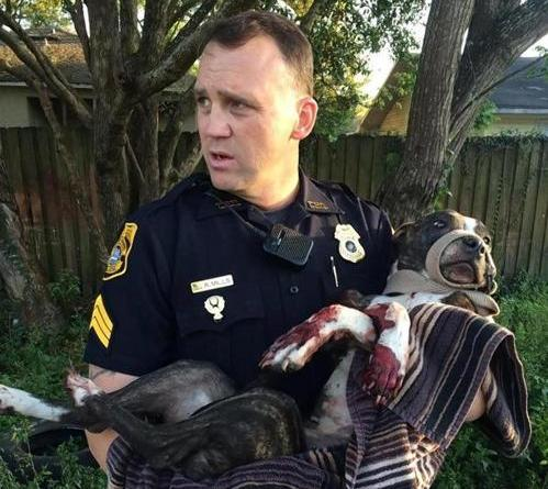tampa police save dog shot and tied to train tracks