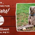 Shelter Dogs Score with MLB Opening Day Home Runs