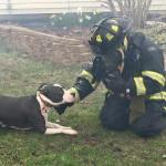 Indianapolis Pit Bull Alerts Dog Mom to House Fire