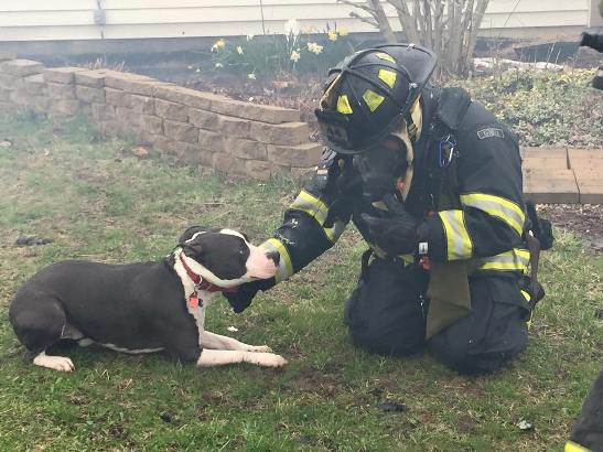 indianapolis pit bull alerts owner to house fire