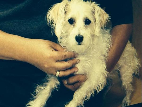 frannie dog stolen by fake lapd officers