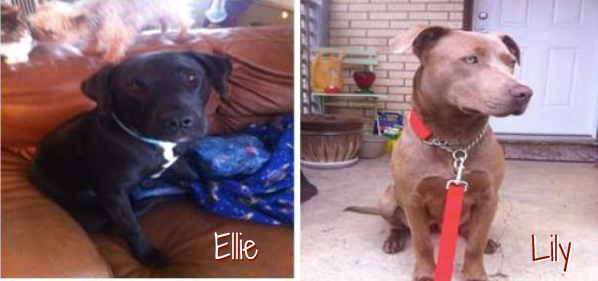 Ellie and Lily from Dallas DogRRR